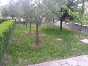Затревяване на двор – Пловдивска област [14]