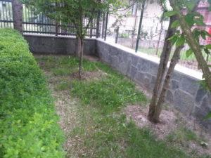 Затревяване на двор – Пловдивска област [12]