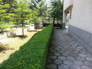 Затревяване на двор – Пловдивска област [11]