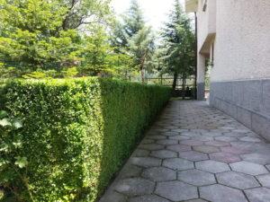 Затревяване на двор – Пловдивска област [9]