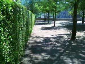 Затревяване на двор – Пловдивска област [7]