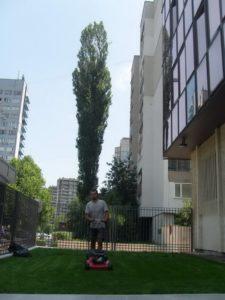 Затревяване на площи – Немско посолство [10]
