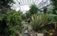 зимна градина