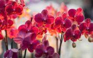 Пет неща, които трябва да знаем за орхидеите [1]