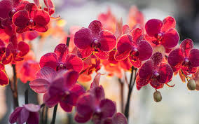 няколко неща които трябва да знаем за орхидеите