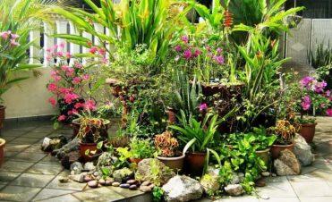 Декоративни растения